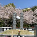 桜が満開です。是非見に来てください!